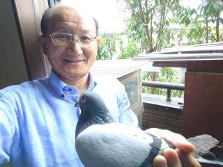 趣味のピジョンスポーツ 第10回「ベランダ鳩舎で、ささやかに鳩飼育」 和田英幸鳩舎