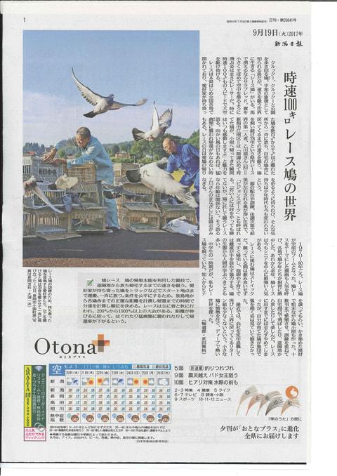 地方新聞が鳩レースの特集を掲載